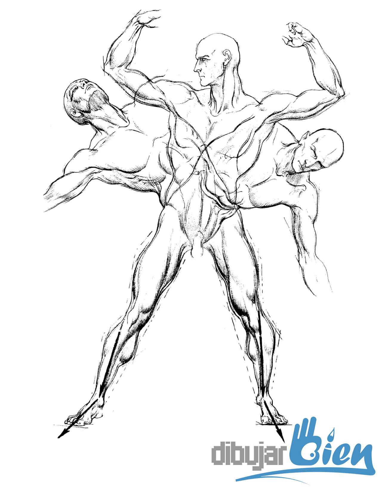 Libros para dibujar anatoma Burne Hogarth el dibujante del Rey